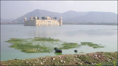 Jaipur's Jal Mahal (Water Palace)