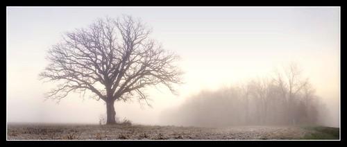 The Tree 57