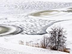Winterscape (edwindejongh) Tags: winter holland nature nederlands winterscape dutchwinter ijs haarlemmermeer winterlandschap winterinholland haarlemmermeersebos icefigures ijsvormen