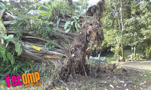 Sickly trees at cemetery in danger if left untreated