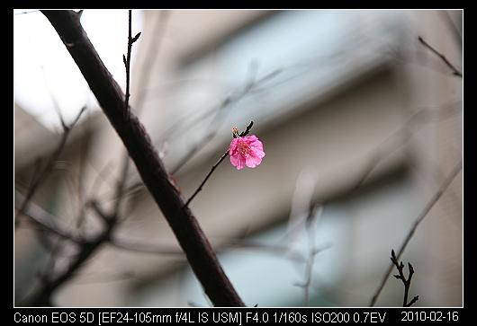 20100217Blossom