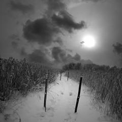 Into the Old Bones (Olli Keklinen) Tags: winter sky bw snow clouds photoshop suomi finland dark square landscape helsinki nikon vanhankaupunginlahti scenery path 100v10f 2010 hays d300 500x500 artlibre ok6 ollik 100commentgroup goldenart redmatrix 20100224