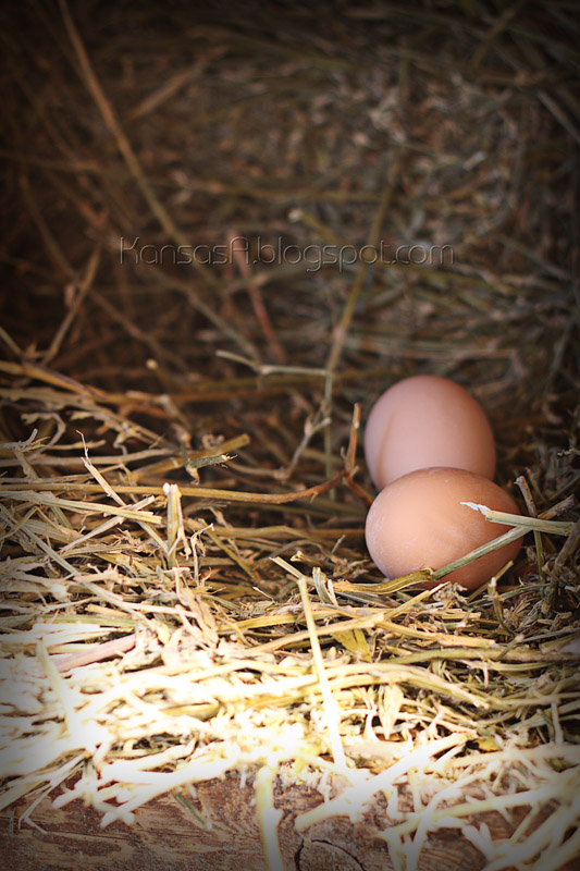 Eggs in the coop (by KansasA)