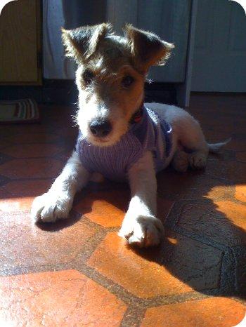 Piper wears a sweater