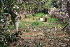 Peaceful Nature (aouniat) Tags: trees winter lebanon nature grass soil canon450d