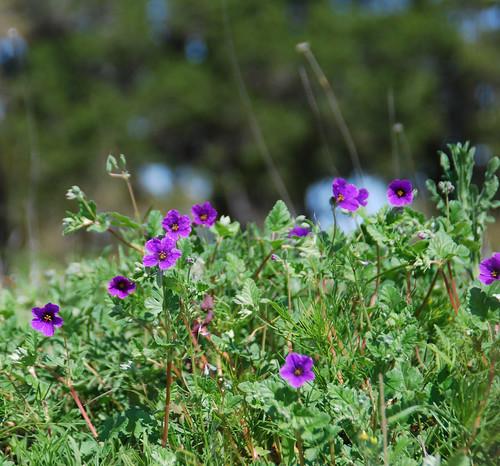 87/365 - Wildflowers
