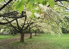 stanley park in spring (alesha joy.) Tags: travel canada nature grass vancouver fun spring path adventure stanleypark iwishidhadmydslrbackthenohthephotosiwouldtake butjustthinkofthephotosyouwilltake