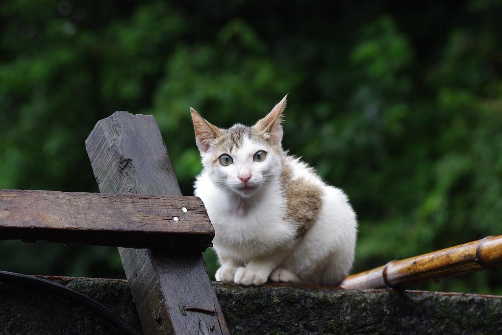 誤闖了貓咪天堂~侯硐