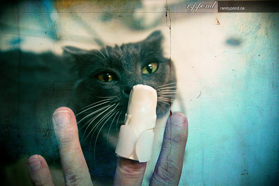 ~ 109/365 Mallet Finger Doc Finny ~
