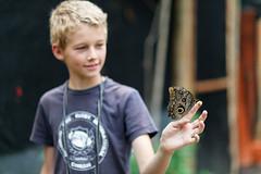 baudchon-baluchon-mindo-papillons-13
