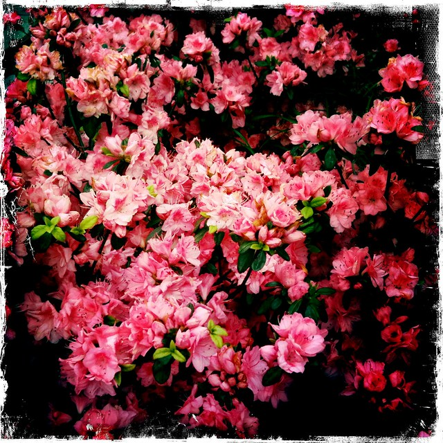 Flowers, Upper East Side