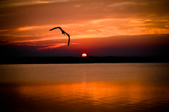 Golden Sunset (Daveyal_photostream) Tags: ocean sunset sun sunlight seascape motion nature beautiful beauty photoshop amazing seagull lovely epic sunsetting lightroom settingsun vacationphoto ongoldenpond wildwoodnewjersey awesomeshots mycamerabag slicesoftime d7000 meandmygear wildwoodcreast