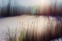 _MG_8824-Edit #MotionBlur (warrengeorgebell) Tags: pond bullrushes motionblur flickrfriday