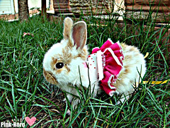 Baby Bunny (pinkyia™) Tags: pink baby bunny grass dress little roro pinkyia pinkroro