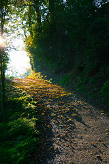 Herbstweg (Undertable) Tags: road autumn light sun leaves way licht fly laub herbst foliage route mosquito lane flies greenery 1001nights sonne autumnal gnat midges mosquitoes weg midge fliegen mcken undertable mckenschwarm assamstadt flickraward herbstweg