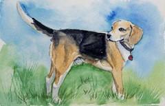buddybeagle (Gina* Pegasus) Tags: watercolor animalportraits