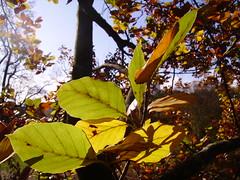 (KINOBORI) Tags: tree climbing treeclimbing kinobori