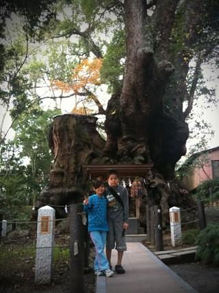 熱海来宮神社のご神木、大楠、樹齢2,000年以上、高さ26m、周囲23.9m⁉