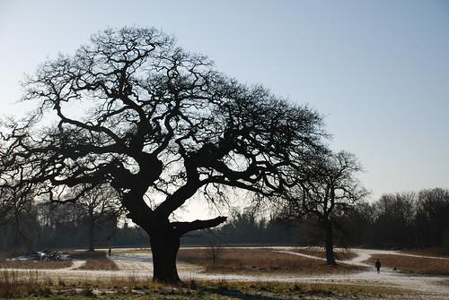 Catton Park 5