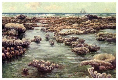022-La Gran Barrera en Queensland-Australia (1910)-Percy F. Spence
