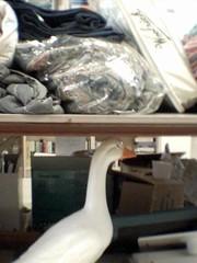 The Goose Ducks