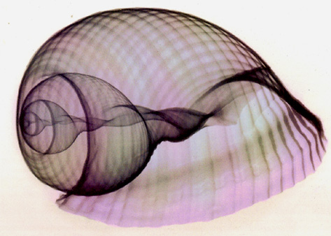X_Ray_Shell_Vortices