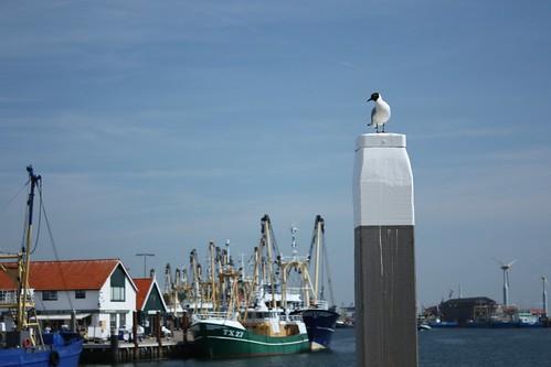 Oudeshilde - Texel