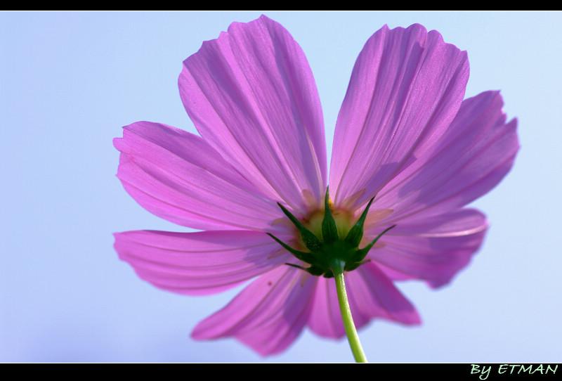 花與花 還有花
