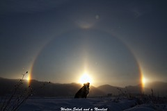The halo #3 (waltersoluh) Tags: winter dog snow nature sunrise landscape halo rs thelittledoglaughed platinumphoto visiongroup theunforgettablepictures platinumheartaward colorsofthesoul redmatrix magicunicornverybest adrinnesmagicalmoments mygearandmepremium mygearandmebronze