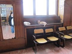 haydarpasa train station - lounge and kitties