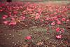 一面の落花