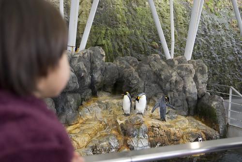 もちろんペンギンもいます。