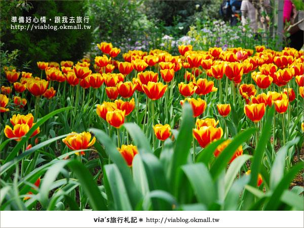 【梅峰農場】不止桃花美!梅峰農場賞花趣~(下)23