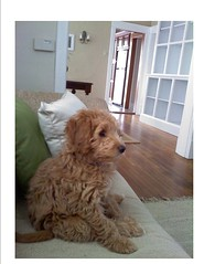 This is Mollie shillin' on couch :) She's one of Cupcake and Chewy's girls!!