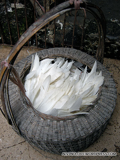Basket full of feathers