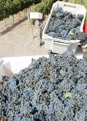 Las amenazas del vino argentino