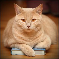 READING A</p><p>BOOK..