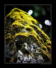 moss covered rocks [explored] (e.nhan) Tags: light green nature closeup landscape moss colorful colours bokeh arts backlighting enhan