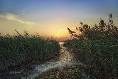 Winter's Sunset - Qatar (zai Qtr) Tags: sunset qatar zaiqtr nature outdoor winter2017 friday shams water sky green warm ksa exploreqatar