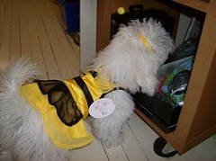 Bumblebee Princess Daisy (Metro Hound) Tags: tag tshirt tags add pirate his finn