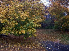 RainyFoliage_102809_sophie