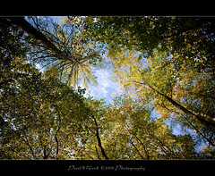 The Other Perspective (oliver's | photography) Tags: trees friends sky color scale nature forest photoshop canon landscape fun eos flickr raw adobephotoshop oliver view angle image natur  perspective himmel sigma adobe frame landschaft wald bume soe dymanic blick rahmen artland ontour copyrighted blickwinkel pixelwork creativephoto 1770mm naturepoetry mywinners canoneos50d photoscape flickrdiamond searchthrbest sigma1770mmf2845dchsm artofimages pixelwork2009photography oliverhoell theacademytreealley theotherperspective allphotoscopyrighted