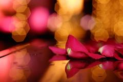 (Cesar Poblete S.) Tags: luces rosa nikkor petalos 50mmf14af
