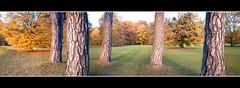Herbstwald 17 (Bigeminus) Tags: autumn red panorama orange brown rot yellow forest germany deutschland photography licht fotografie cam gelb braun landschaft bltter bume baum bunt kamera lichter kassel photografie auepark blattbltterrotgelb panoramaaueparkkassel