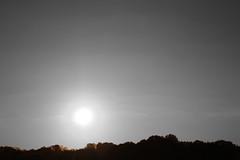 sunset 2 (judithloving) Tags: sunset photoshop horizon treeline