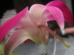 Orchid's hooked stem perfect for a glass of coke