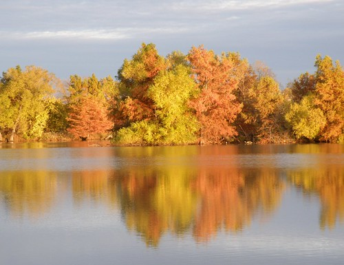 Trees on the big pond
