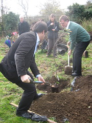Planting a tree for Sipson