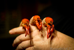 Tres Amigos (bOw_phOto) Tags: orange pentax crawfish dslr mudbugs crawdads fa35mm fa35mmf20 smcpfa35mmf20al k200d justpentax pentaxart crustaceanportraits