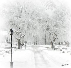 JANUARI 2010 I SKINNSKATTEBERG (Eva's PhotoAlbum) Tags: white whiteonwhite tistheseason supershot naturepoetry visiongroup lesamisdupetitprince selectbestfavorites truthandillusion